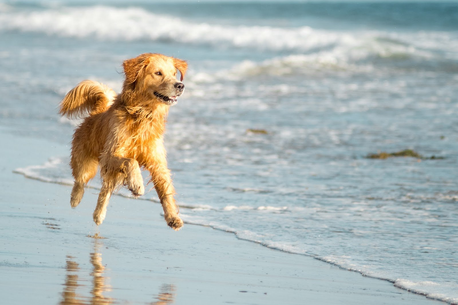 The Best Beaches in Cornwall to Take Your Dog