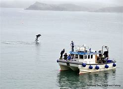 Fishing Trips From Newquay Harbour