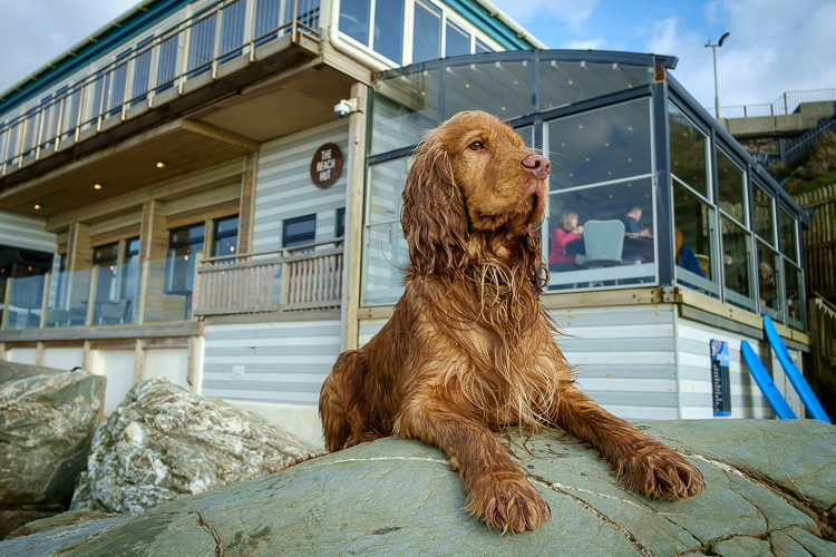 Our Favourite Dog-Friendly Restaurants in Cornwall